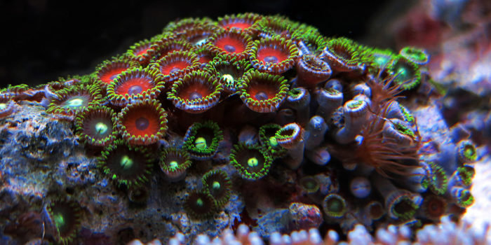 How to fix your sick coral
