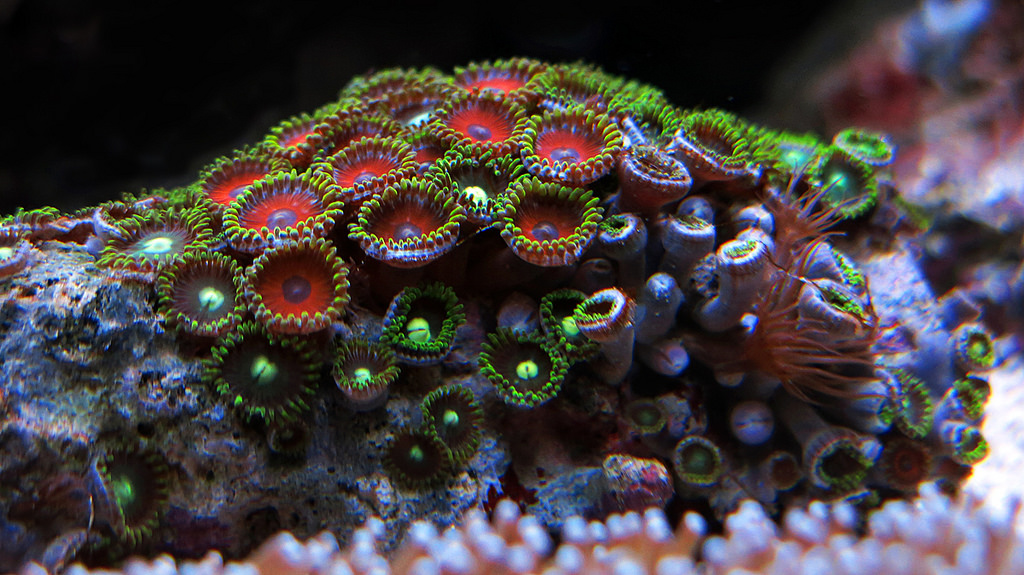 Fixes For 11 Major Coral And Invertebrate Problems