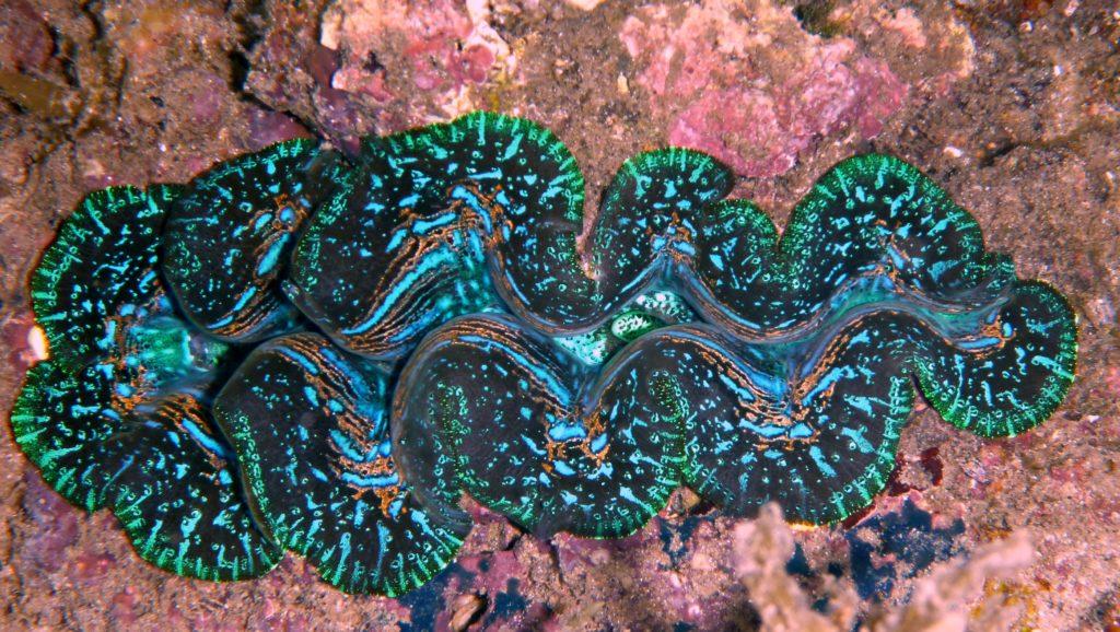 diagnosing coral illness