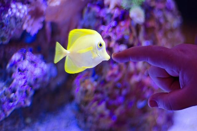 Choose aquarium fish
