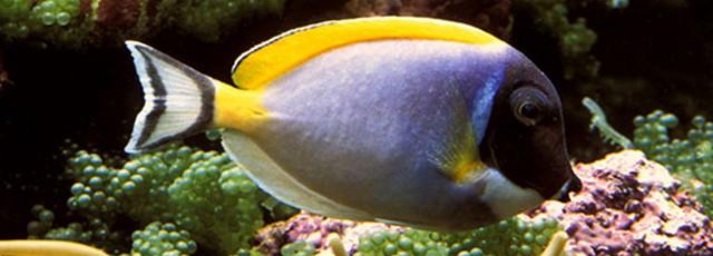 correct marine fish selection