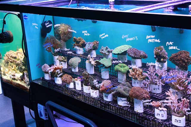 How to choose corals