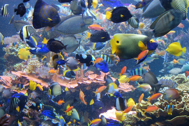 Aquarium fish selection