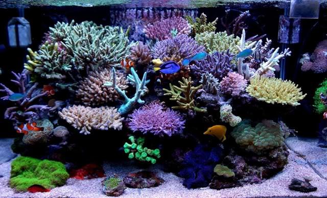 Reef tank mistakes