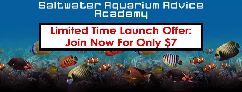 saltwater aquarium improving water quality