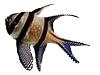 banggai-cardinalfish