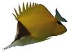 longnosed-butterflyfish