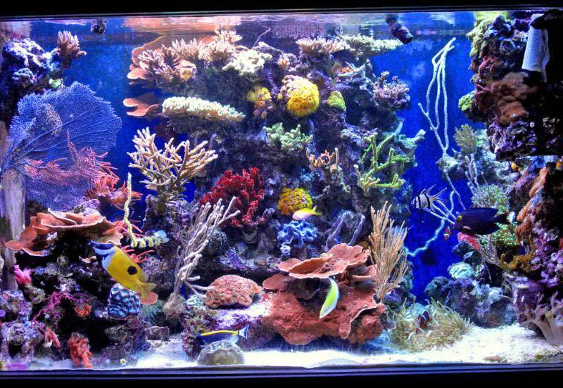 Saltwater Aquarium Secret Weapon