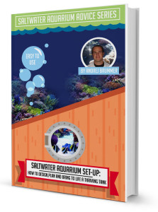Saltwater Aquarium Set Up How to Design, Plan and Bring to live a thriving tank