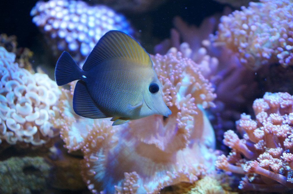 sand sifting fresh water fish
