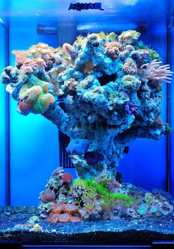 Winning with a small tank how to avoid tiny tank disaster for Micro fish tank