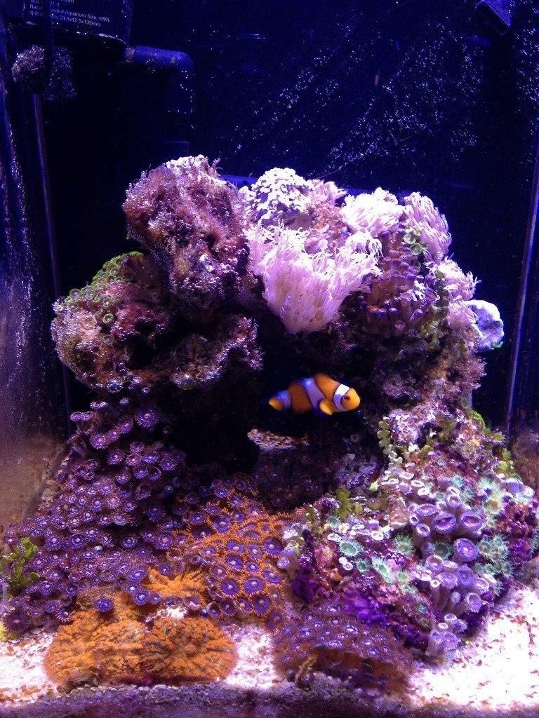 small aquarium tips