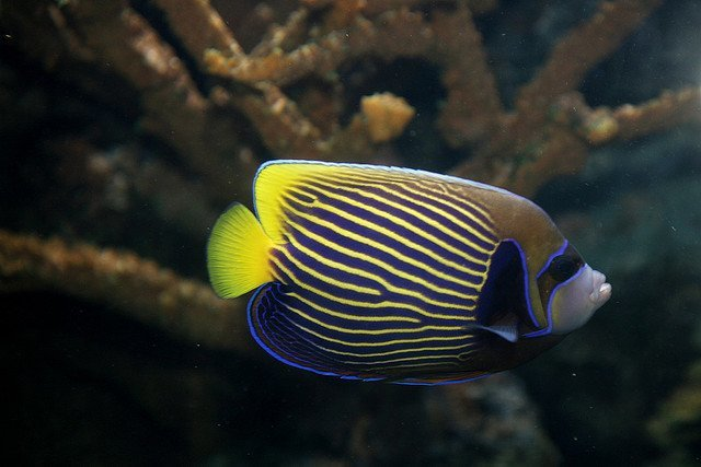 Thriving Angelfish Keeping Tips