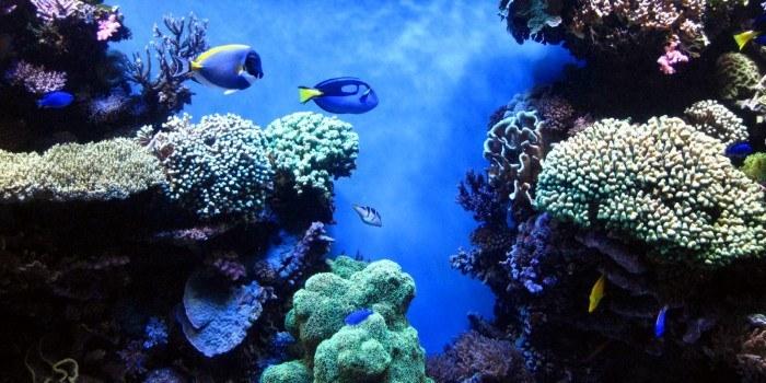 saltwater aquarium mistakes