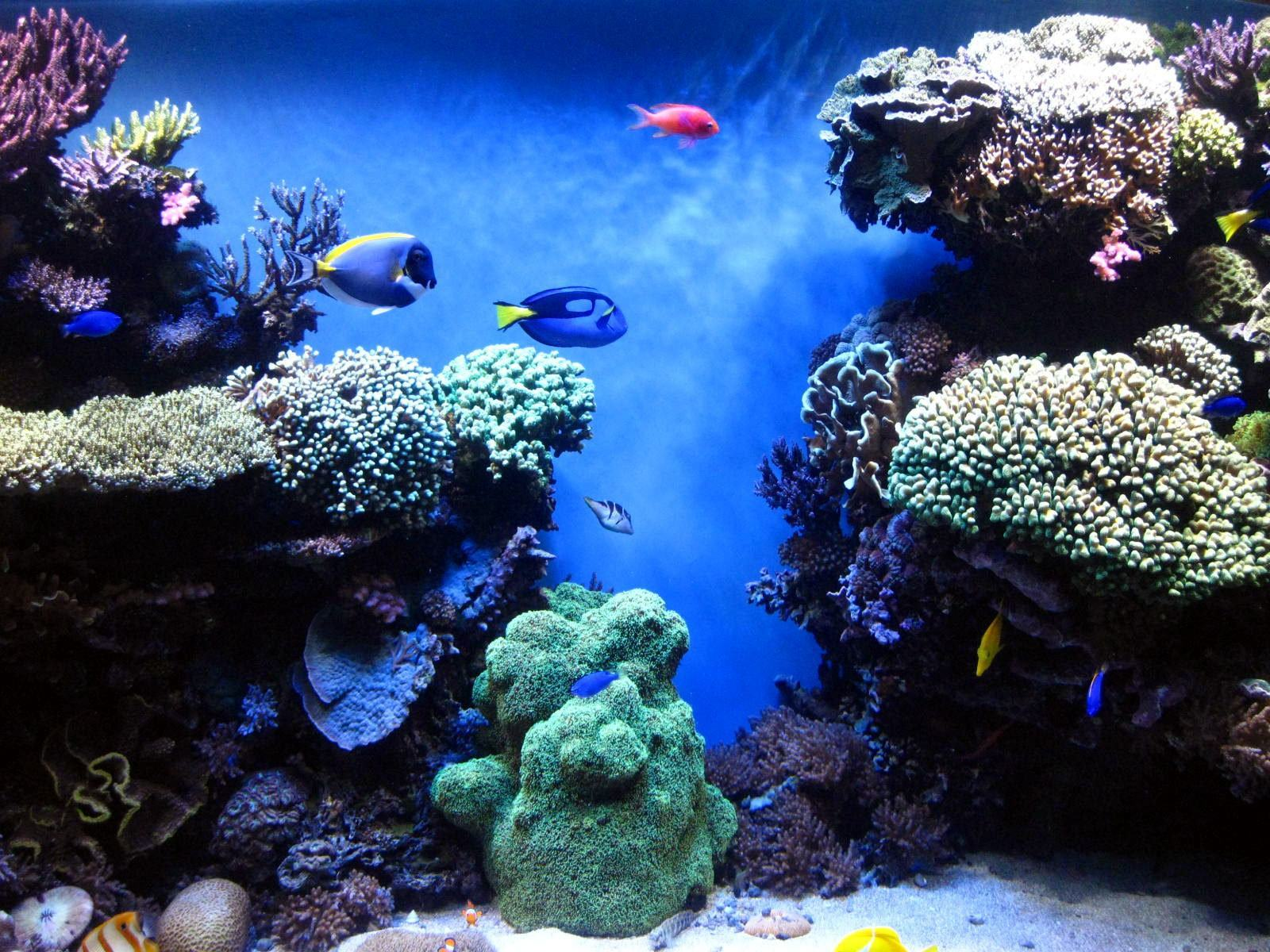 Avoid The Top 6 Saltwater Tank Mistakes Everyone Else Is Making