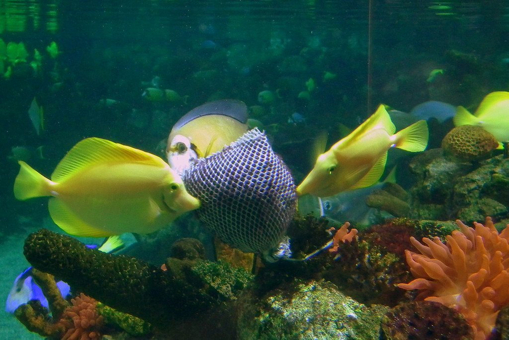 How to feed marine aquarium fish