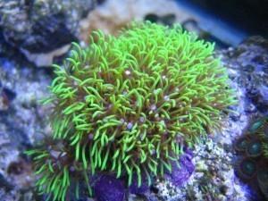 fix coral problems