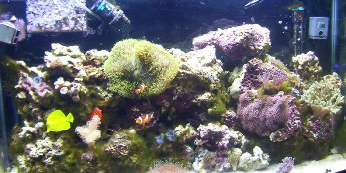 pest algae