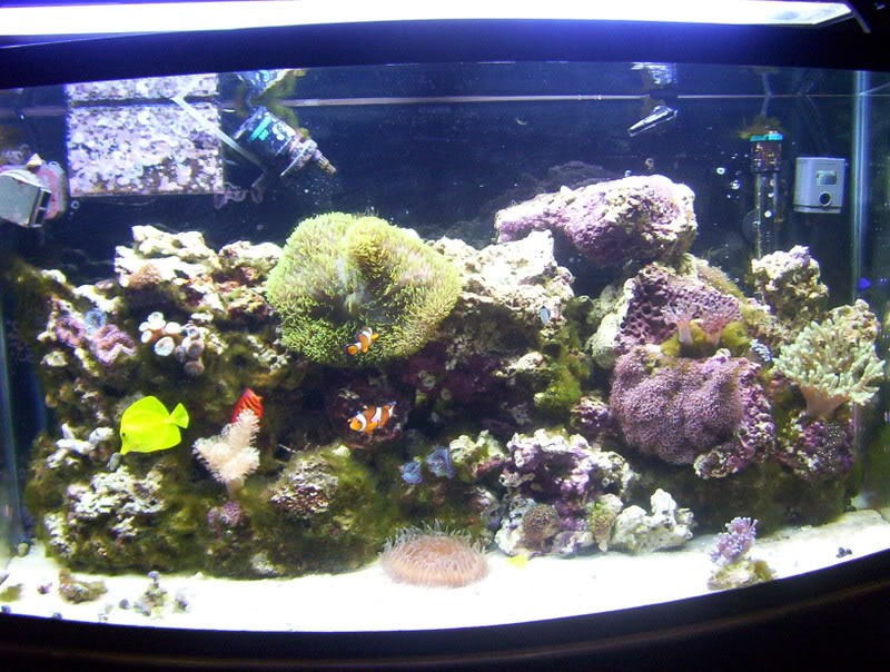 How To Rid Your Saltwater Aquarium Of Pest Algae