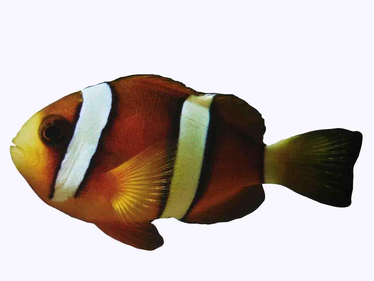 Marine Fish Health And Disease Saltwater Aquarium Advice