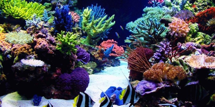saltwater aquarium advice
