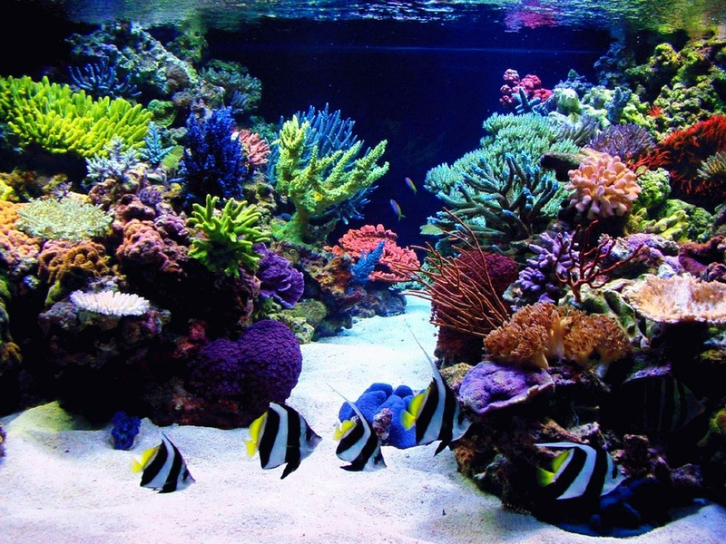 How To Solve Problems With Corals
