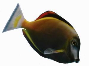 Saltwater Aquarium Set Up Success