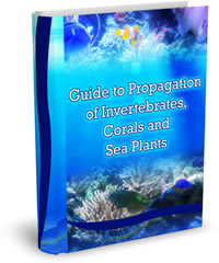 Saltwater Aquarium Fish and Coral Guide to Propagation of Invertebrates, Corals and Sea Plants