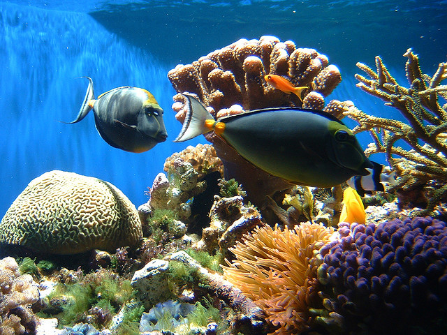Marine fish health