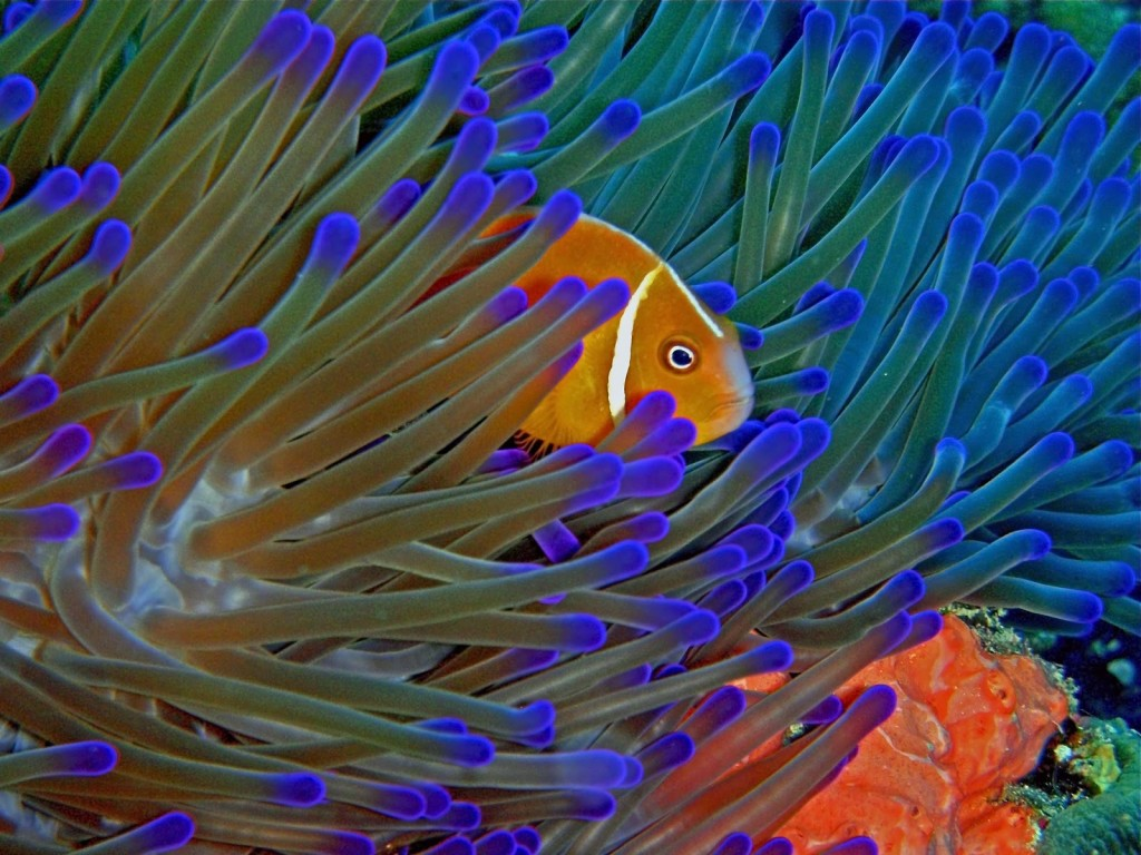 marine fish optimal diet