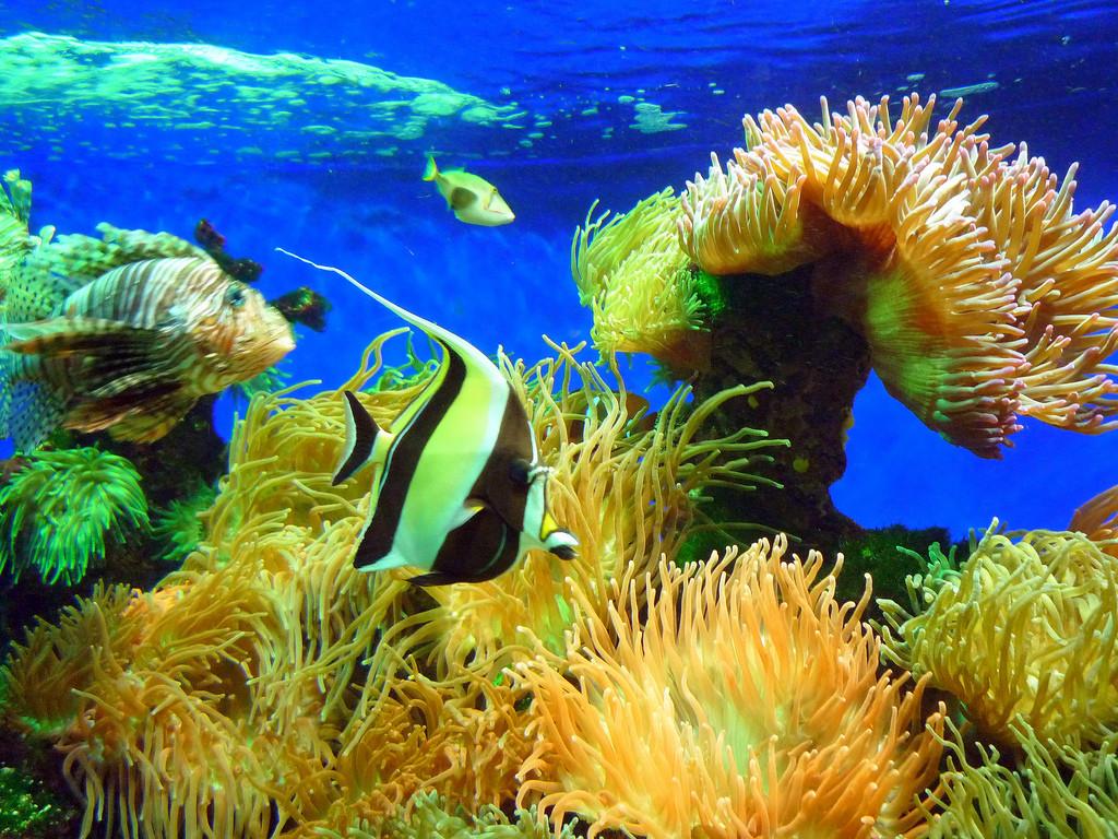 marine fish diet