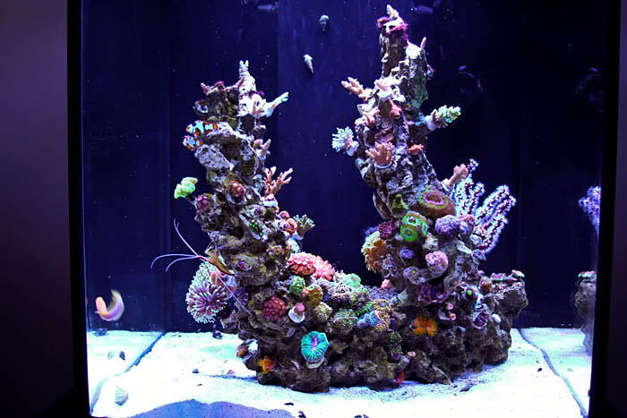 Aquarium aquascaping ideas