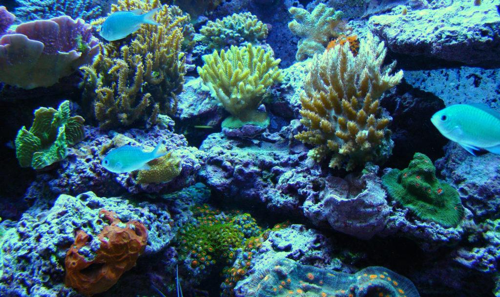 reef tank phosphates