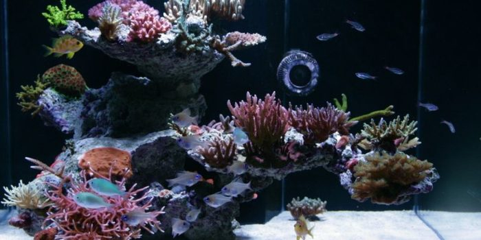 how to aquascape an aquarium