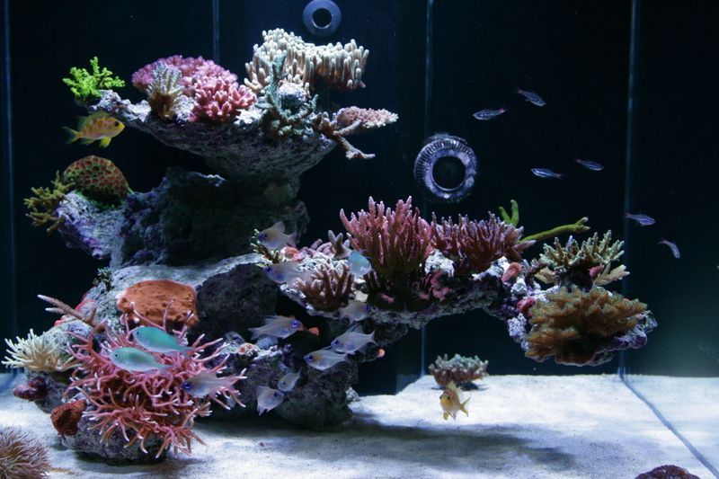 Tips for awesome aquascapes