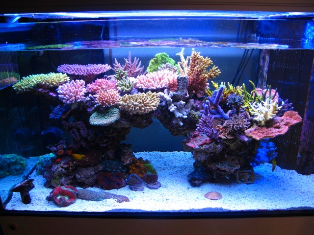 Aquarium Aquascape Design