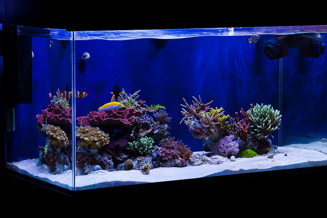 aquarium aquascapes