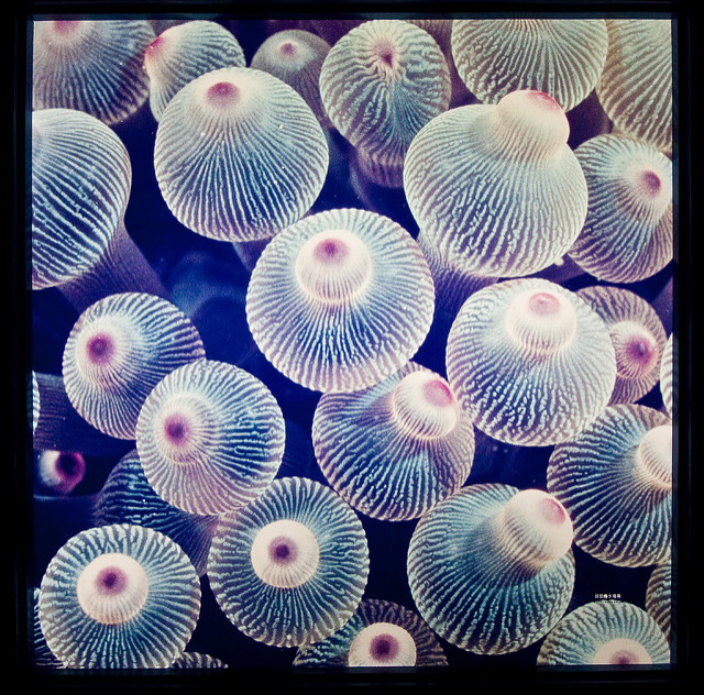 anemone tips