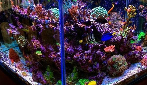 which aquarium to buy