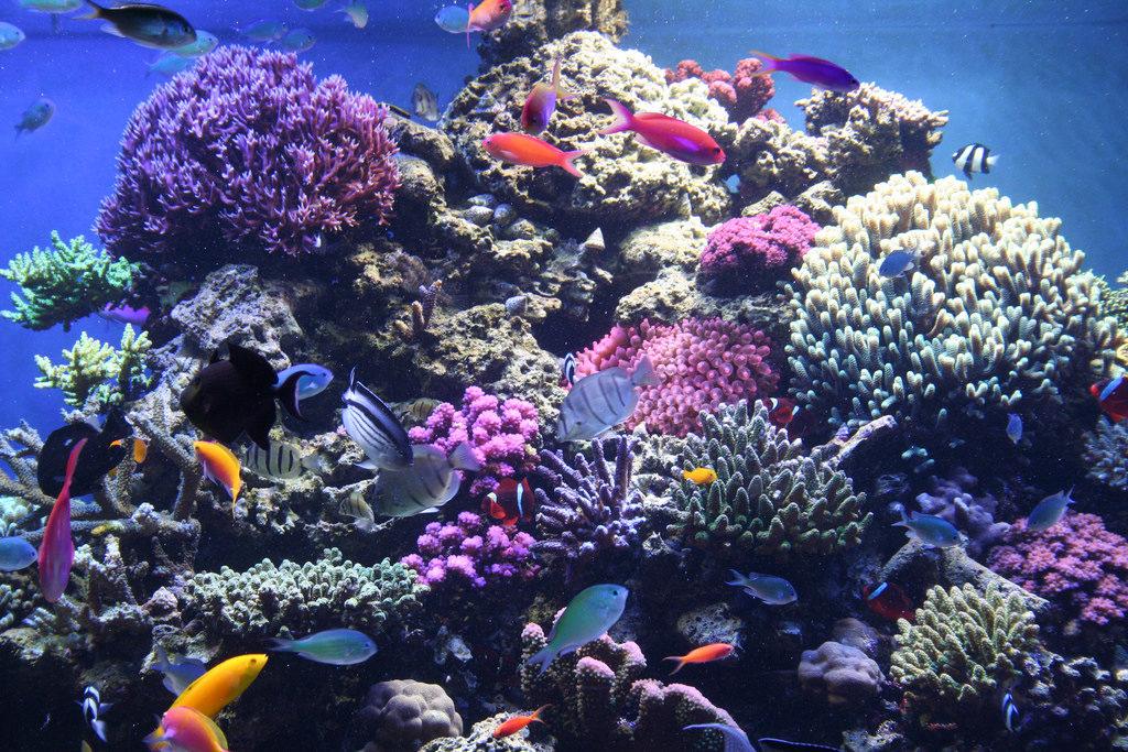 Aquarium selection