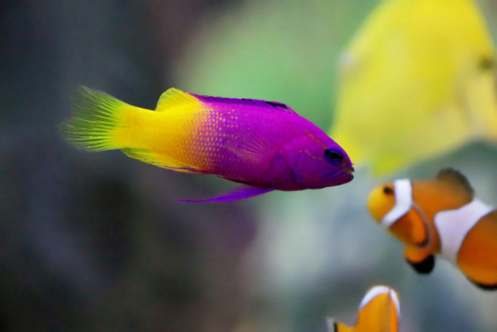 what size saltwater aquarium to get