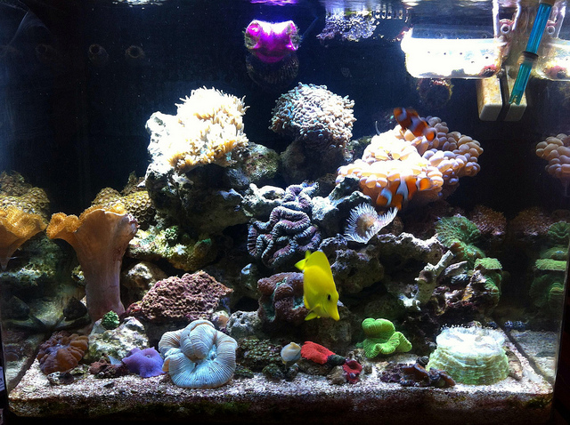 A mostly LPS themed tank is a thing of beauty (image credit: Franklin Samir Dattein)
