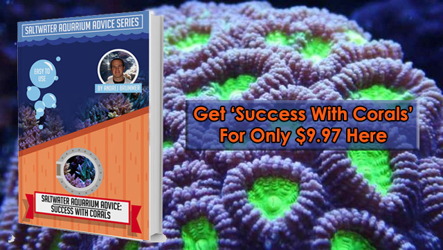 Get more success with corals