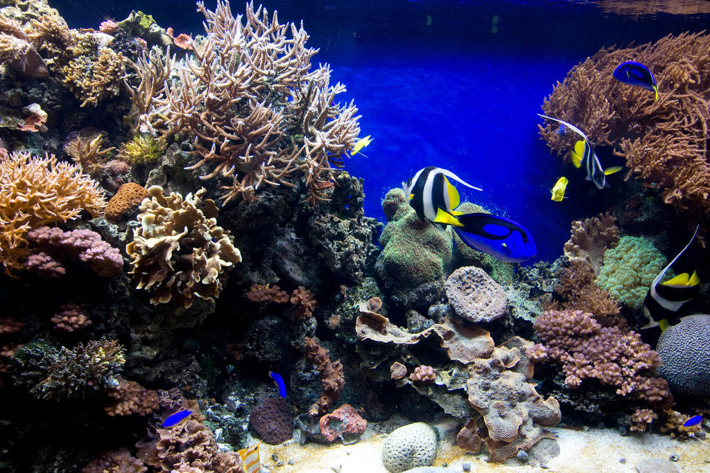 How To Make Aquarium Corals More Colorful Saltwater Aquarium Advice