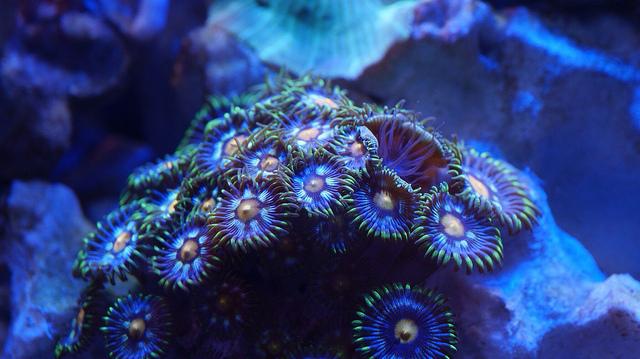 hard coral PE