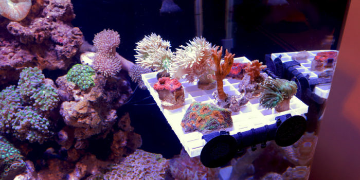 coral polyps don't extend