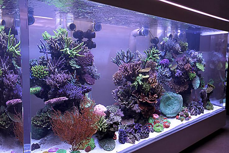mistakes with corals