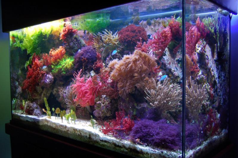 saltwater aquarium tips