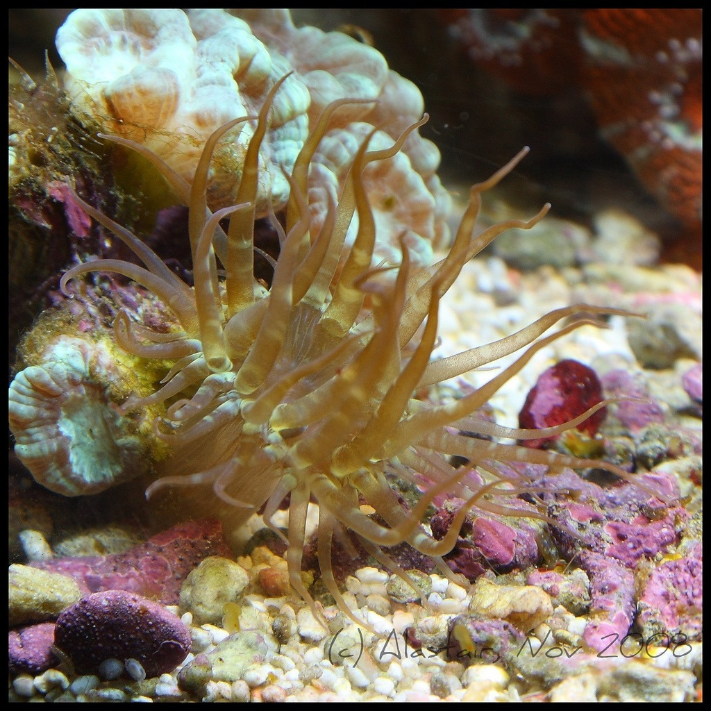 reef aquarium pests