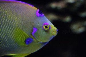Anglefish Care